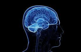 Beyin Haritası Nedir? Nasıl Çıkar? 3