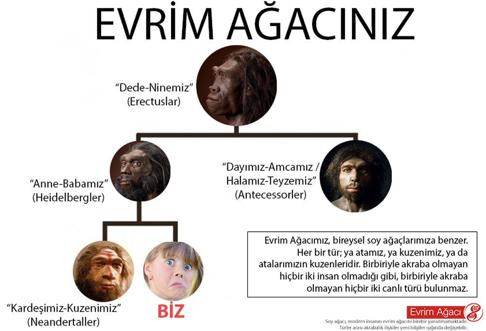 Evrim nedir? 4