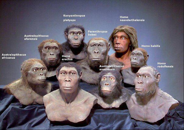 Modern İnsanların Evrimi 4
