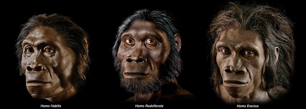 Modern İnsanların Evrimi 1