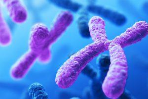 Kromozom nedir? 1