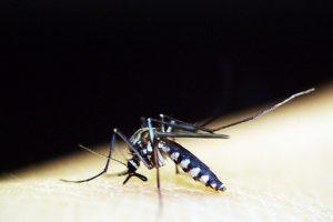Sıtma nedir? 1